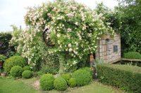 Le jardin de Lieve